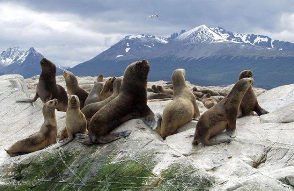 Un utilisateur boycotte Shell Oil en raison de l'arpentage de l'exploration pétrolière dans le nord de l'Alaska--un endroit peuplé d'espèces en voie de disparition. Cliquez ici pour en savoir plus & discuter : http://bit.ly/MIVJNY