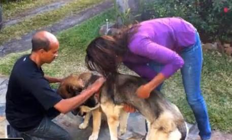 A la Réunion, un chien s'évade du chenil de la SPA et fait 10 km pour retrouver son frère!