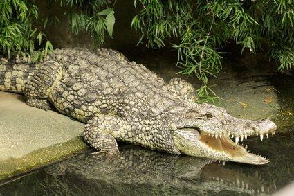 Serpent, rat, crocodile ? Dites-nous quel animal vous effraie le plus !