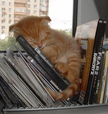 Un chat, ça s'endort vraiment n'importe où... et le vôtre, quel est son endroit insolite préféré ?