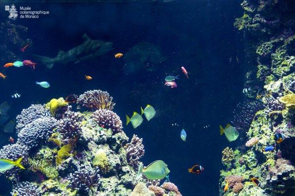 Le lagon aux requins du Musée, comme si vous étiez en pleine mer... Avec dans le fond, la silhouette d'un pointe noire !