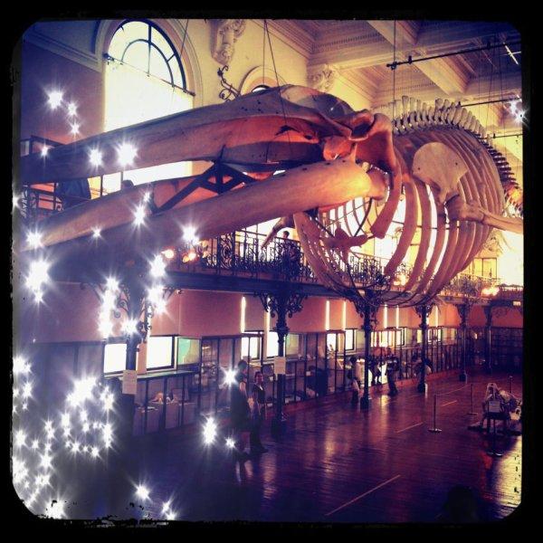 Une vue de la salle de la Baleine.