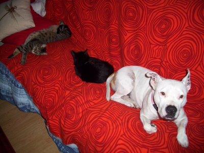 Anthéa et les chats.