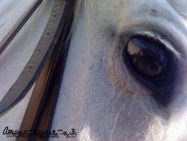 """"""" La vie c'est comme l'équitation, il faut franchir les obstacles ....""""     Avec toi, elle est beaucoup plus simple ♥"""