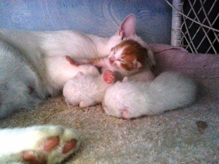 Aquarelle et petits chats :3