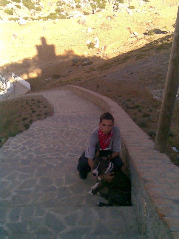 charas  dog  dyali