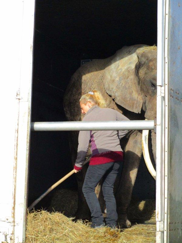 l'éléphante BABY