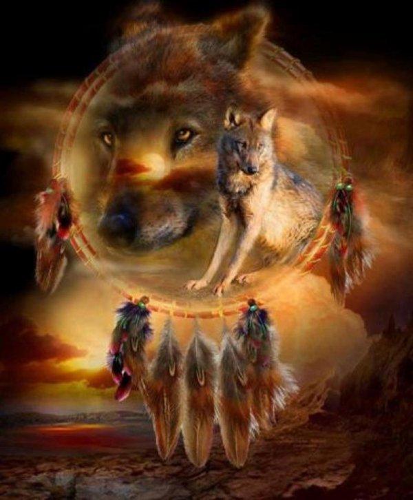 les loup que j'aime  beaucoup
