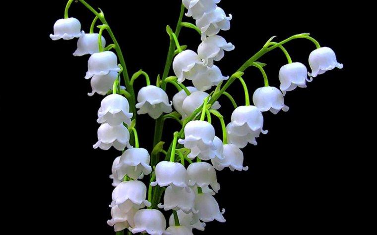 ✽✿ ❀• merci à begonia520 et romantik85100 pour ces magnifiques créas•❀✿✽