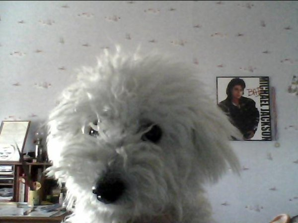 Falco, mon fidéle chien qui est fan de skyrock comme moi...