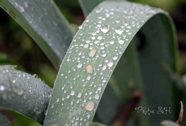 Après la pluie !