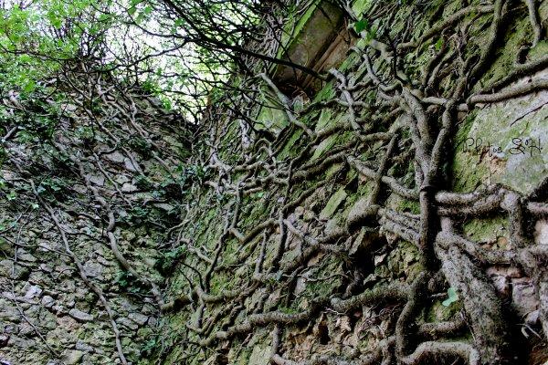 Le Mas Rouquet ,la nature reprend ses droits .