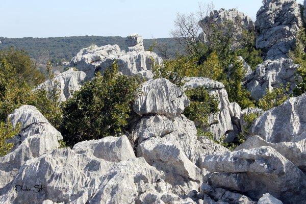 Randonnée à Sauve (Gard )