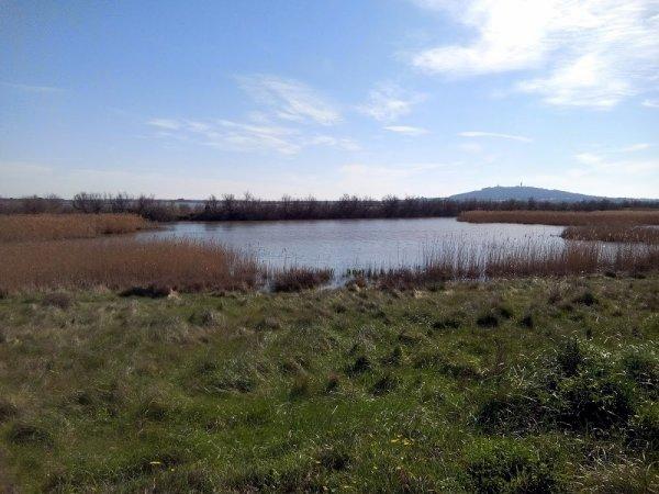La réserve naturelle  du Bagnas Marseillan 34