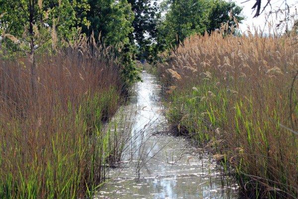 Site naturel protégé du Méjean , Lattes 34  (suite)