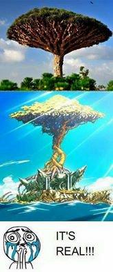 L'île Tenrô Existe *^*
