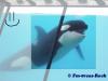 fm-orques
