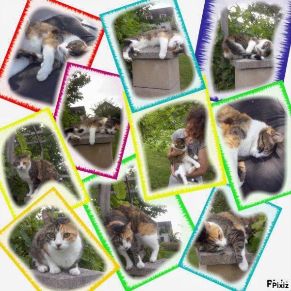 Le top 10 du chat!!!