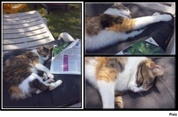 La sièste d'Haru! Vie de chat! ;-)