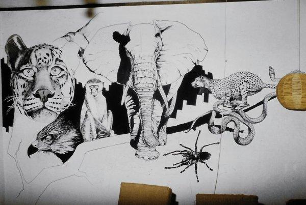 mural club hippique Bukavu