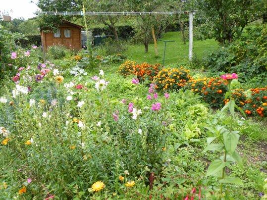 jardin bien envahi!