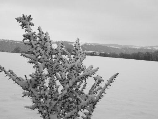 une petite série avec la neige