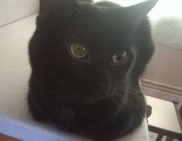 swag mon piti chat (il s'appelle sergie ne me demander pas pourquoi)