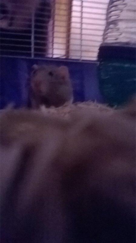je vous présente un petit nouveau il s'appelle Mitsu