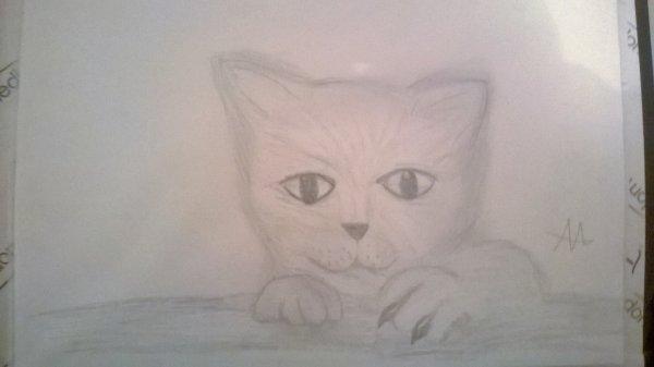 petit chaton trop mignon dessiné par mes soins ^w^