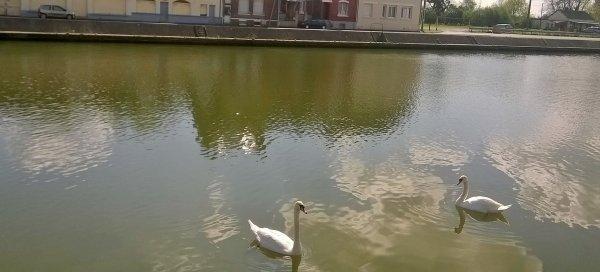 petite balade au bord du canal