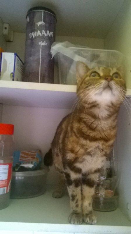 piti chat roi du placard (chanson) 😻