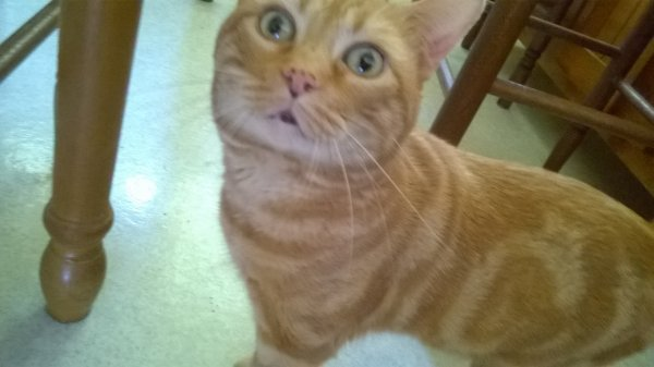 Garfield un de mes 5 piti chat ^w^