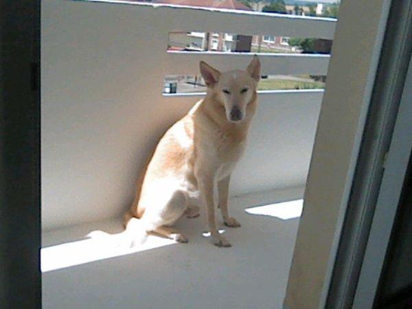 mon chien dans toute sa splendeur ^w^