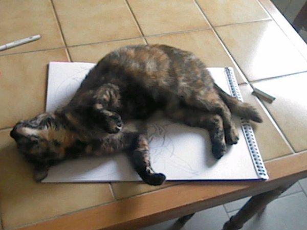 tu ne dessinera pas Miaou