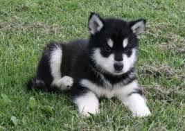 Le journal d'un chien : Pourquoi suis-je né ?