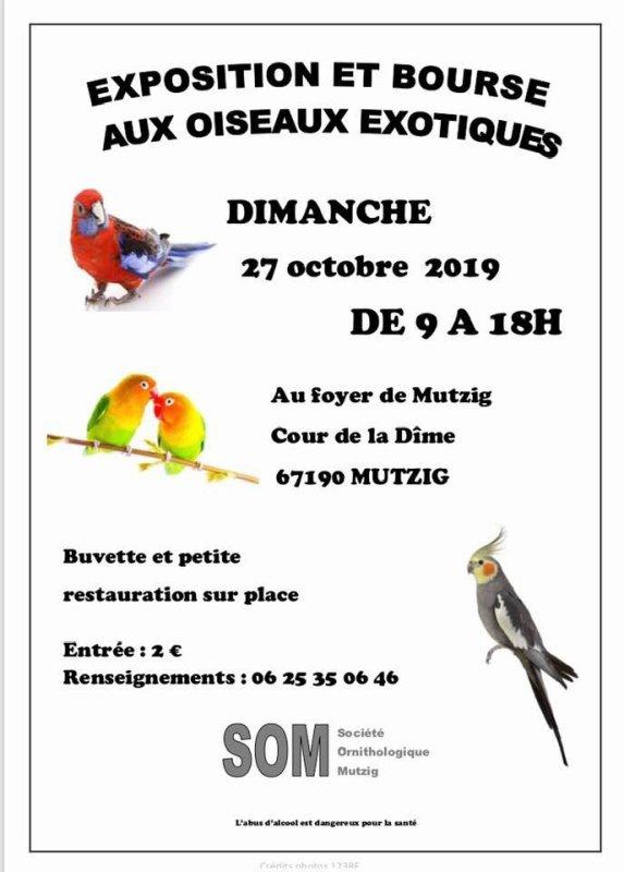 EXPOSITION-BOURSE AUX OISEAUX