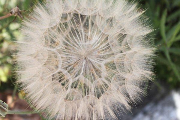GÉNÉREUSE NATURE ( Feu d'artifice végétal )