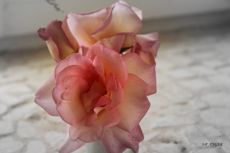ROSE DE MADAME GOUDIG