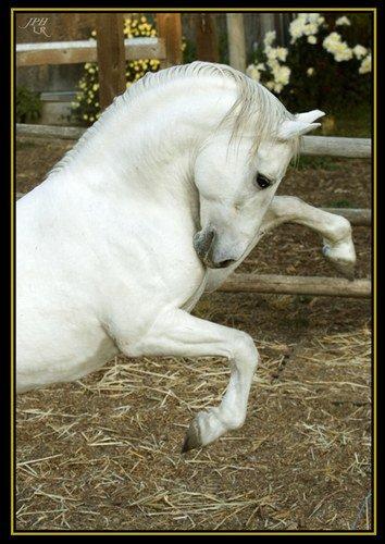 8 races de chevaux