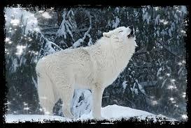 la fourrure de neige