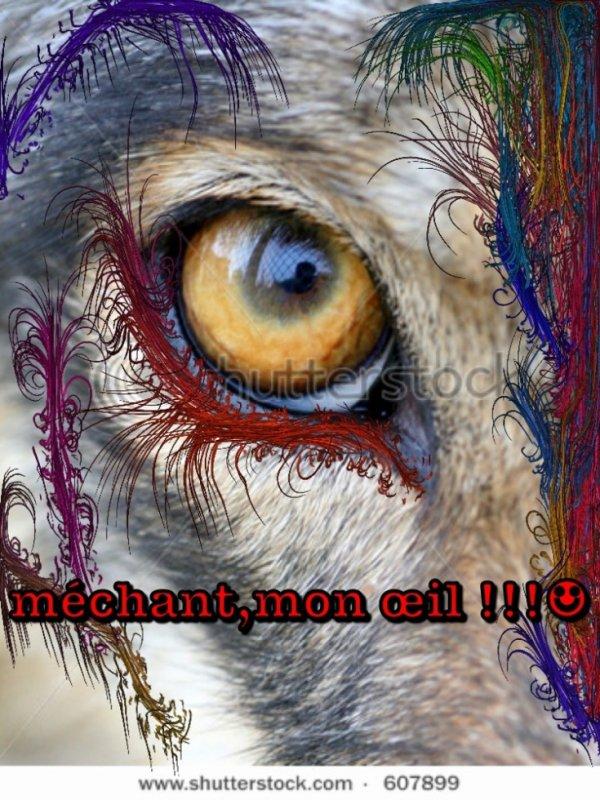 Le loup méchant!!!???!!? La bonne blague :-)