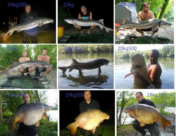 mes poissons record 2012/2013
