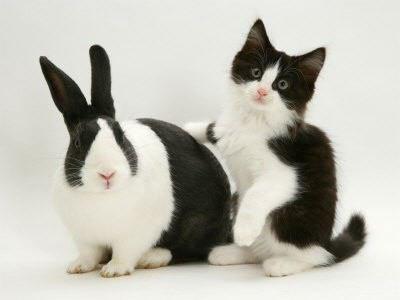 Un chat et un lapin.