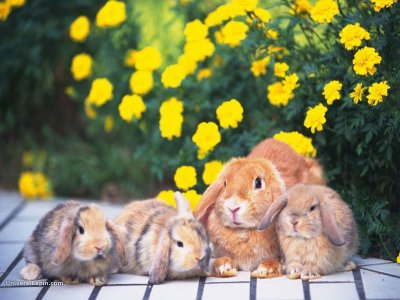 Une famille lapin.