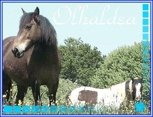 Olhaldea `s Skyrock _. New`Lettter