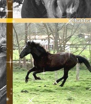Olhaldea `s Skyrock _. Races de chevaux de trait