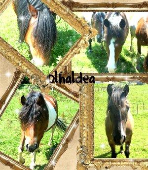 Olhaldea `s Skyrock _. Races de pOneys