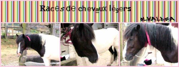 Olhaldea `s Skyrock _. Races de chevaux légers