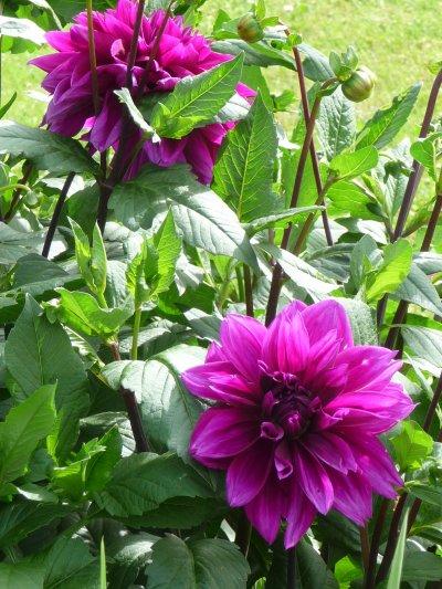 Apres midi jardinage!!!