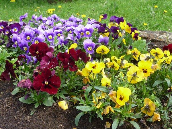 Fleurs du jardin!!!